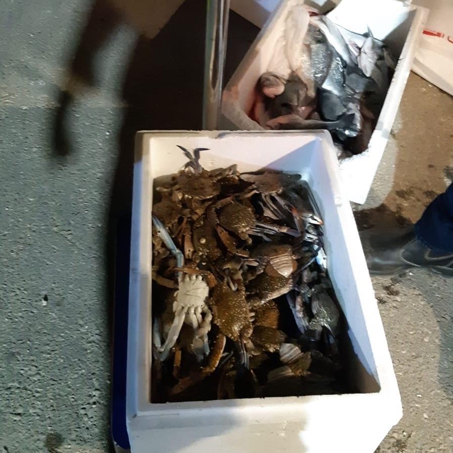 הדגים שנתפסו. צילום: עיריית חולון