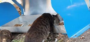 עמדות האכלה חדשות לחתולי רחוב ברחבי חולון. צילום-עיריית חולון (1)