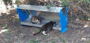 עמדות האכלה חדשות לחתולי רחוב ברחבי חולון. צילום-עיריית חולון (11)