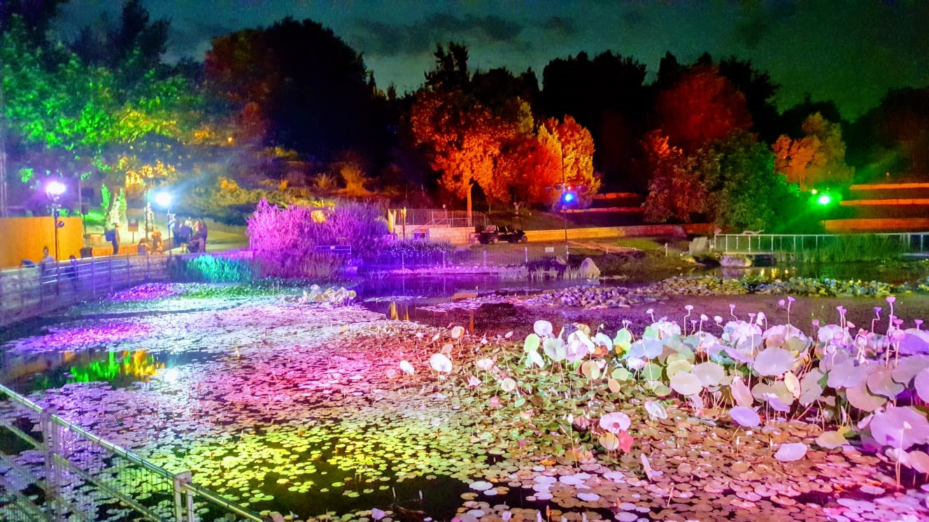 תאורת ארץ האגדות בגן הבוטני. צילום תום עמית