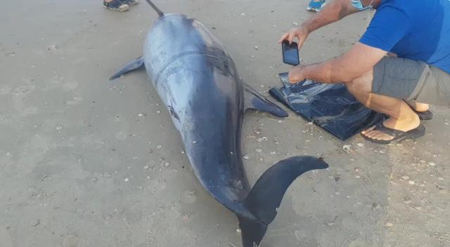 דולפין נסחף לחוף צילום רותי ניב