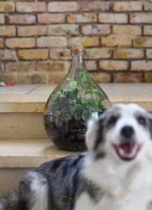 פתרון לחובבי הגינון נטולי הגינה- צילום כלוריס