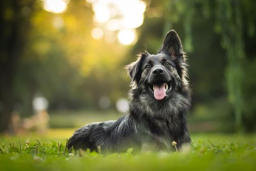 בחירת כלב מתאים לילדים