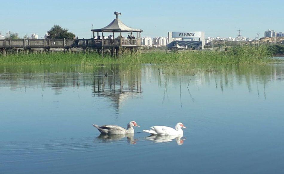 פארק אגם ברבורים צילום עיריית ראשון לציון