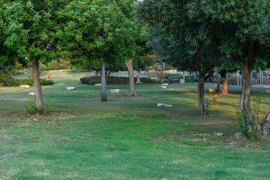 פארק עצים צילום עיריית ראשון לציון