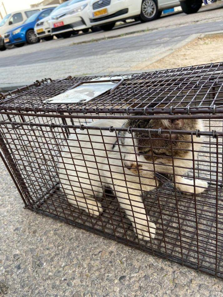חתול בכלוב צילום דוברות משטרת ישראל