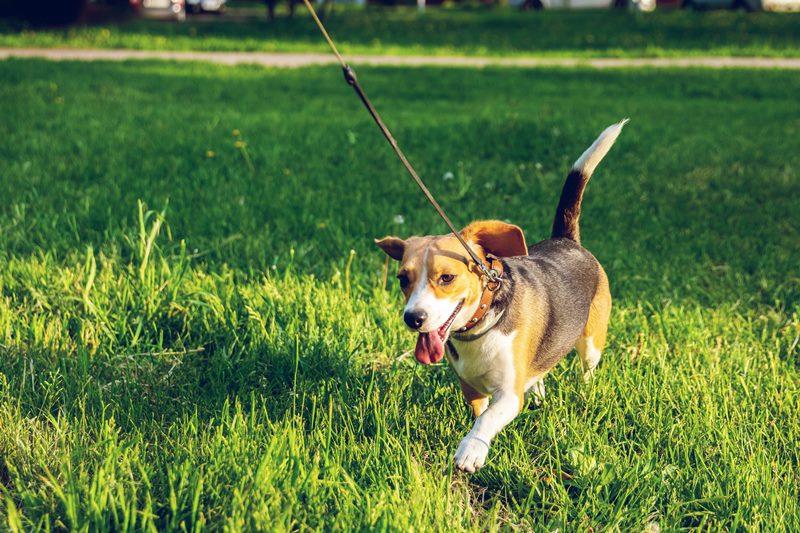 כלב (2) צילום עיריית חולון