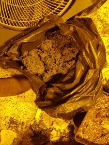 סמים קנאביס 2 צילום דוברות משטרת ישראל