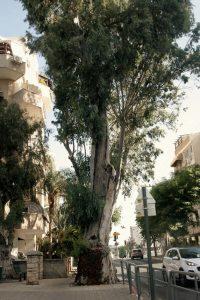 עץ צילום דוברות עיריית ראשון לציון