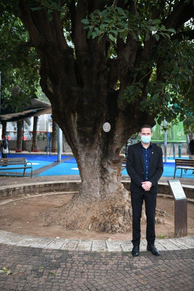 רז קינסטליך עץ ותיק צילום דוברות עיריית ראשון לציון