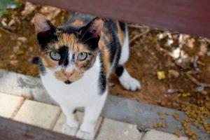 חתולי רחוב חולונים צילום-עיריית חולון (2)