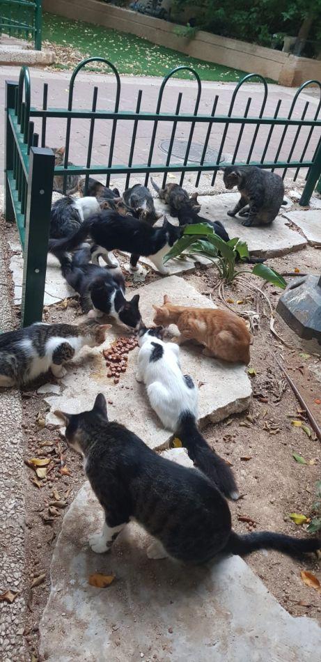 חתולים חתולי רחוב צילום פרטי
