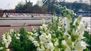 פריחה אביבית בחולון, 2021, צילום-עיריית חולון (1)