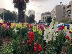 פריחה אביבית בחולון, 2021, צילום-עיריית חולון (4)