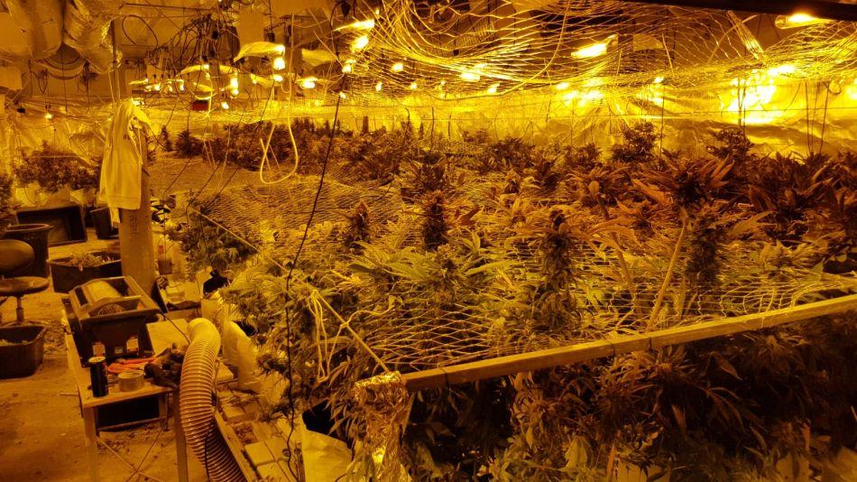 סמים קנאביס צילום דוברות משטרת ישראל