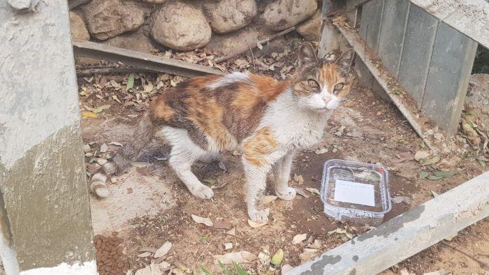 החתולה פיפי נמצאה. צילום: פרטי