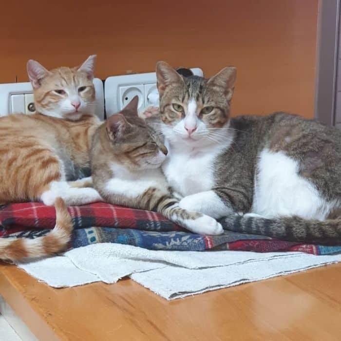 החתולים שנעלמו (מלבד האמצעי)