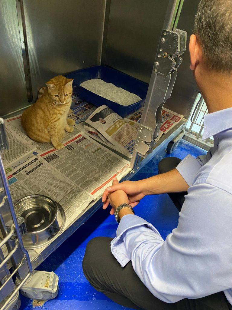 חתול בשירות הווטרינרי