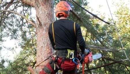 כורת עצים