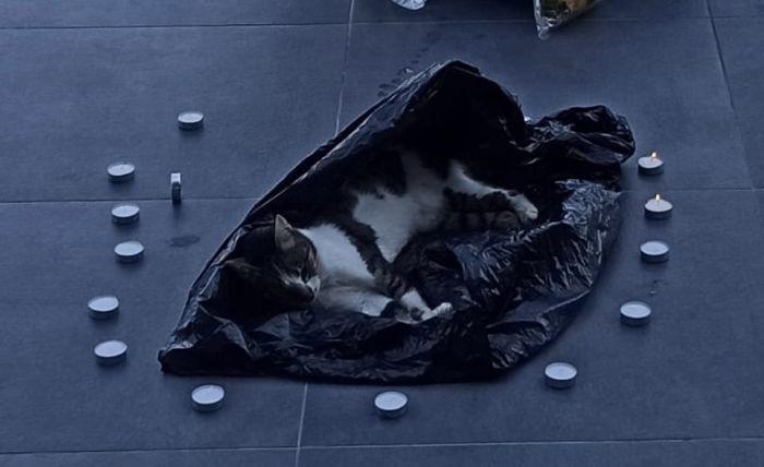החתולה מחוץ לבניין העירייה. צילום פרטי