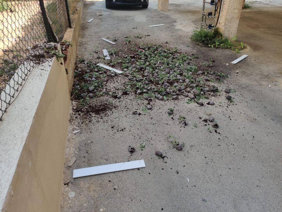 השתילים שנתפסו – צילום דוברות משטרת ישראל